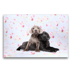Premium Textil-Leinwand 75 x 50 cm Quer-Format Labrador Retriever Welpe / Labrador Retriever Puppy   Wandbild, HD-Bild auf Keilrahmen, Fertigbild auf hochwertigem Vlies, Leinwanddruck von Jeanette Hutfluss