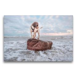 Premium Textil-Leinwand 75 x 50 cm Quer-Format Lagotto Romagnolo Freiheitsstatue an der Ostsee | Wandbild, HD-Bild auf Keilrahmen, Fertigbild auf hochwertigem Vlies, Leinwanddruck von Wuffclick-pic