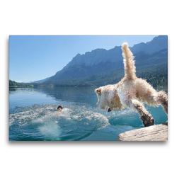 Premium Textil-Leinwand 75 x 50 cm Quer-Format Lagotto Romagnolo stürzt sich in die Fluten eines Gebirgssees | Wandbild, HD-Bild auf Keilrahmen, Fertigbild auf hochwertigem Vlies, Leinwanddruck von Wuffclick-pic