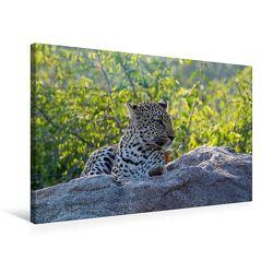 Premium Textil-Leinwand 75 x 50 cm Quer-Format Leopard | Wandbild, HD-Bild auf Keilrahmen, Fertigbild auf hochwertigem Vlies, Leinwanddruck von Robert Styppa von Styppa,  Robert