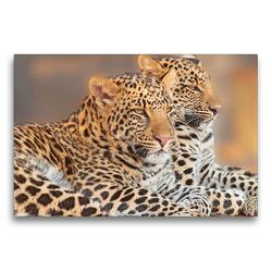 Premium Textil-Leinwand 75 x 50 cm Quer-Format Leoparden | Wandbild, HD-Bild auf Keilrahmen, Fertigbild auf hochwertigem Vlies, Leinwanddruck von Rose Hurley
