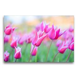 Premium Textil-Leinwand 75 x 50 cm Quer-Format Lilienblütige Tulpen   Wandbild, HD-Bild auf Keilrahmen, Fertigbild auf hochwertigem Vlies, Leinwanddruck von Rose Hurley