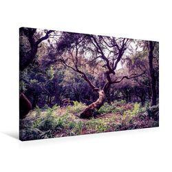 Premium Textil-Leinwand 75 x 50 cm Quer-Format Lorbeerbaum auf Madeira | Wandbild, HD-Bild auf Keilrahmen, Fertigbild auf hochwertigem Vlies, Leinwanddruck von Val Thoermer von Thoermer,  Val