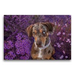 Premium Textil-Leinwand 75 x 50 cm Quer-Format Louisiana Catahoula Leopard Dog | Wandbild, HD-Bild auf Keilrahmen, Fertigbild auf hochwertigem Vlies, Leinwanddruck von Catahouligan on Tour