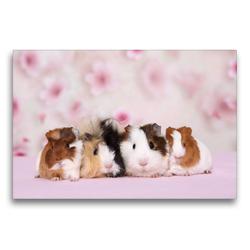 Premium Textil-Leinwand 75 x 50 cm Quer-Format Meerschweinchen | Wandbild, HD-Bild auf Keilrahmen, Fertigbild auf hochwertigem Vlies, Leinwanddruck von Jeanette Hutfluss