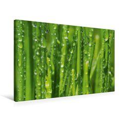Premium Textil-Leinwand 75 x 50 cm Quer-Format Meine kleine grüne Wassertropfen Welt   Wandbild, HD-Bild auf Keilrahmen, Fertigbild auf hochwertigem Vlies, Leinwanddruck von Gabi Siebenhühner von Siebenhühner,  Gabi