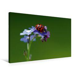 Premium Textil-Leinwand 75 x 50 cm Quer-Format Naturschönheiten | Wandbild, HD-Bild auf Keilrahmen, Fertigbild auf hochwertigem Vlies, Leinwanddruck von Gabi Siebenhühner
