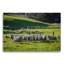 Premium Textil-Leinwand 75 x 50 cm Quer-Format Neuseeländische Schafsherde | Wandbild, HD-Bild auf Keilrahmen, Fertigbild auf hochwertigem Vlies, Leinwanddruck von Art is Passion Photodesign by Silvia Höld