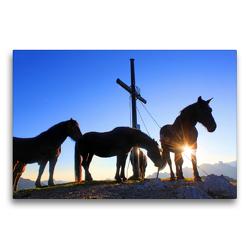 Premium Textil-Leinwand 75 x 50 cm Quer-Format Norikerpferde am Gipfelkreuz des Frommerkogels | Wandbild, HD-Bild auf Keilrahmen, Fertigbild auf hochwertigem Vlies, Leinwanddruck von Christa Kramer