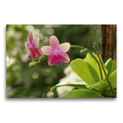 Premium Textil-Leinwand 75 x 50 cm Quer-Format Orchidee rosé | Wandbild, HD-Bild auf Keilrahmen, Fertigbild auf hochwertigem Vlies, Leinwanddruck von Bianca Schumann