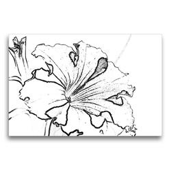 Premium Textil-Leinwand 75 x 50 cm Quer-Format Petunie in Schwarz Weiß. | Wandbild, HD-Bild auf Keilrahmen, Fertigbild auf hochwertigem Vlies, Leinwanddruck von Marlise Gaudig