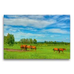 Premium Textil-Leinwand 75 x 50 cm Quer-Format Pferdekoppel im Barnimer Land | Wandbild, HD-Bild auf Keilrahmen, Fertigbild auf hochwertigem Vlies, Leinwanddruck von Ralf Wittstock
