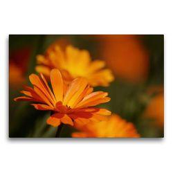 Premium Textil-Leinwand 75 x 50 cm Quer-Format Ringelblumen | Wandbild, HD-Bild auf Keilrahmen, Fertigbild auf hochwertigem Vlies, Leinwanddruck von Bianca Schumann