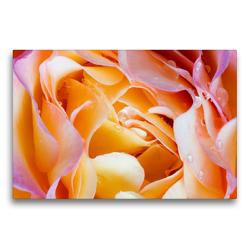 Premium Textil-Leinwand 75 x 50 cm Quer-Format Rosenblütenblätter mit Wassertropfen | Wandbild, HD-Bild auf Keilrahmen, Fertigbild auf hochwertigem Vlies, Leinwanddruck von Xenia Schlossherr