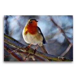Premium Textil-Leinwand 75 x 50 cm Quer-Format Rotkehlchen   Wandbild, HD-Bild auf Keilrahmen, Fertigbild auf hochwertigem Vlies, Leinwanddruck von Sabine Löwer