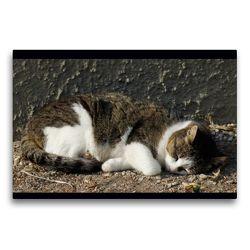 Premium Textil-Leinwand 75 x 50 cm Quer-Format Schlafende Hauskatze | Wandbild, HD-Bild auf Keilrahmen, Fertigbild auf hochwertigem Vlies, Leinwanddruck von kattobello