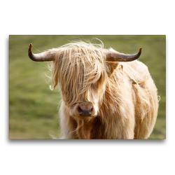 Premium Textil-Leinwand 75 x 50 cm Quer-Format Schottische Highland Kuh | Wandbild, HD-Bild auf Keilrahmen, Fertigbild auf hochwertigem Vlies, Leinwanddruck von Harald Schnitzler