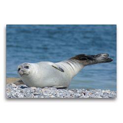 Premium Textil-Leinwand 75 x 50 cm Quer-Format Seehund Gruß | Wandbild, HD-Bild auf Keilrahmen, Fertigbild auf hochwertigem Vlies, Leinwanddruck von Kattobello