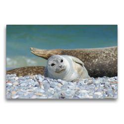 Premium Textil-Leinwand 75 x 50 cm Quer-Format Seehundbaby | Wandbild, HD-Bild auf Keilrahmen, Fertigbild auf hochwertigem Vlies, Leinwanddruck von Kattobello