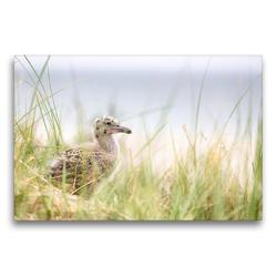 Premium Textil-Leinwand 75 x 50 cm Quer-Format Silbermöwenbaby | Wandbild, HD-Bild auf Keilrahmen, Fertigbild auf hochwertigem Vlies, Leinwanddruck von N N