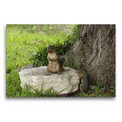 Premium Textil-Leinwand 75 x 50 cm Quer-Format Squirl mit Baby | Wandbild, HD-Bild auf Keilrahmen, Fertigbild auf hochwertigem Vlies, Leinwanddruck von Conny Krakowski