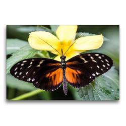 Premium Textil-Leinwand 75 x 50 cm Quer-Format Tiger-Passionsblumenfalter | Wandbild, HD-Bild auf Keilrahmen, Fertigbild auf hochwertigem Vlies, Leinwanddruck von Lebensfreude Innere Stärke