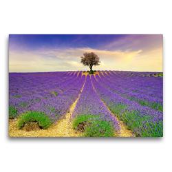 Premium Textil-Leinwand 75 x 50 cm Quer-Format Traum-Ziele – Lavendel der Provence, Frankreich | Wandbild, HD-Bild auf Keilrahmen, Fertigbild auf hochwertigem Vlies, Leinwanddruck von Peter Roder