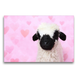 Premium Textil-Leinwand 75 x 50 cm Quer-Format Walliser Schwarznasenschaf | Wandbild, HD-Bild auf Keilrahmen, Fertigbild auf hochwertigem Vlies, Leinwanddruck von Jeanette Hutfluss