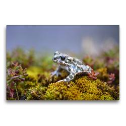 Premium Textil-Leinwand 75 x 50 cm Quer-Format Wechselkröte | Wandbild, HD-Bild auf Keilrahmen, Fertigbild auf hochwertigem Vlies, Leinwanddruck von GUGIGEI