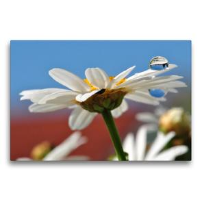 Premium Textil-Leinwand 75 x 50 cm Quer-Format Weiße Margerite mit Wassertropfen | Wandbild, HD-Bild auf Keilrahmen, Fertigbild auf hochwertigem Vlies, Leinwanddruck von Susanne Herppich