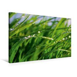 Premium Textil-Leinwand 75 x 50 cm Quer-Format Wellness Gras | Wandbild, HD-Bild auf Keilrahmen, Fertigbild auf hochwertigem Vlies, Leinwanddruck von Tanja Riedel von Riedel,  Tanja