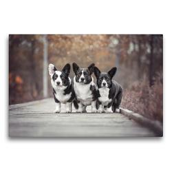Premium Textil-Leinwand 75 x 50 cm Quer-Format Welsh Corgi Trio | Wandbild, HD-Bild auf Keilrahmen, Fertigbild auf hochwertigem Vlies, Leinwanddruck von Maria Ahrens