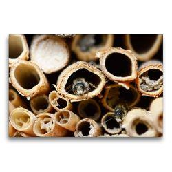 Premium Textil-Leinwand 75 x 50 cm Quer-Format Wildbienen am Insektenhotel | Wandbild, HD-Bild auf Keilrahmen, Fertigbild auf hochwertigem Vlies, Leinwanddruck von Anja Frost