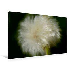 Premium Textil-Leinwand 75 x 50 cm Quer-Format Wilde Pusteblume | Wandbild, HD-Bild auf Keilrahmen, Fertigbild auf hochwertigem Vlies, Leinwanddruck von Heike Hultsch von Hultsch,  Heike