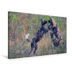 Premium Textil-Leinwand 75 x 50 cm Quer-Format Wildhunde | Wandbild, HD-Bild auf Keilrahmen, Fertigbild auf hochwertigem Vlies, Leinwanddruck von Robert Styppa von Styppa,  Robert