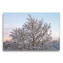 Premium Textil-Leinwand 75 x 50 cm Quer-Format Winterwald im Abendschein | Wandbild, HD-Bild auf Keilrahmen, Fertigbild auf hochwertigem Vlies, Leinwanddruck von kattobello