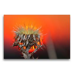 Premium Textil-Leinwand 75 x 50 cm Quer-Format wundervolle Abendstimmung | Wandbild, HD-Bild auf Keilrahmen, Fertigbild auf hochwertigem Vlies, Leinwanddruck von Michis Fotogalerie
