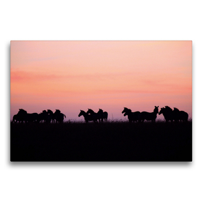 Premium Textil-Leinwand 75 x 50 cm Quer-Format Zebras in der Masai Mara | Wandbild, HD-Bild auf Keilrahmen, Fertigbild auf hochwertigem Vlies, Leinwanddruck von Michael Herzog