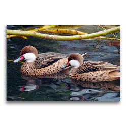 Premium Textil-Leinwand 75 x 50 cm Quer-Format Zwei Bahamaenten | Wandbild, HD-Bild auf Keilrahmen, Fertigbild auf hochwertigem Vlies, Leinwanddruck von Gisela Kruse