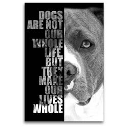 Premium Textil-Leinwand 80 x 120 cm Hoch-Format American Staffordshire Terrier | Wandbild, HD-Bild auf Keilrahmen, Fertigbild auf hochwertigem Vlies, Leinwanddruck von Wilsigns.com – Nicole Hahn
