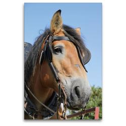 Premium Textil-Leinwand 80 x 120 cm Hoch-Format Ardenner-Porträt | Wandbild, HD-Bild auf Keilrahmen, Fertigbild auf hochwertigem Vlies, Leinwanddruck von Antje Lindert-Rottke