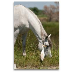 Premium Textil-Leinwand 80 x 120 cm Hoch-Format Camargue Pferd | Wandbild, HD-Bild auf Keilrahmen, Fertigbild auf hochwertigem Vlies, Leinwanddruck von Meike Bölts