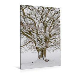 Premium Textil-Leinwand 80 x 120 cm Hoch-Format Dezember: Weiß verzaubert der Schnee die Eiche. | Wandbild, HD-Bild auf Keilrahmen, Fertigbild auf hochwertigem Vlies, Leinwanddruck von Ingo Gerlach GDT von Gerlach GDT,  Ingo