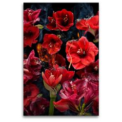 Premium Textil-Leinwand 80 x 120 cm Hoch-Format Fuego amaryllo | Wandbild, HD-Bild auf Keilrahmen, Fertigbild auf hochwertigem Vlies, Leinwanddruck von Olaf Bruhn