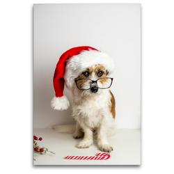 Premium Textil-Leinwand 80 x 120 cm Hoch-Format Hund mit Weihnachtsmütze | Wandbild, HD-Bild auf Keilrahmen, Fertigbild auf hochwertigem Vlies, Leinwanddruck von Sonja Rachbauer