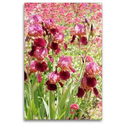 Premium Textil-Leinwand 80 x 120 cm Hoch-Format Iris und Rote Spornblume | Wandbild, HD-Bild auf Keilrahmen, Fertigbild auf hochwertigem Vlies, Leinwanddruck von Gisela Kruse