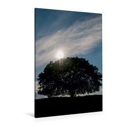 Premium Textil-Leinwand 80 x 120 cm Hoch-Format Juli: Die Eiche im Hochsommer bietet vielen Tieren Schatten und Schutz. | Wandbild, HD-Bild auf Keilrahmen, Fertigbild auf hochwertigem Vlies, Leinwanddruck von Ingo Gerlach GDT