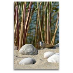 Premium Textil-Leinwand 80 x 120 cm Hoch-Format Muscheln | Wandbild, HD-Bild auf Keilrahmen, Fertigbild auf hochwertigem Vlies, Leinwanddruck von Susanne Herppich
