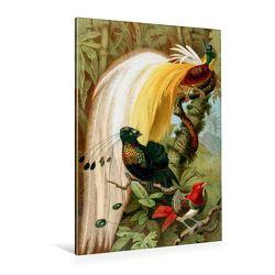 Premium Textil-Leinwand 80 x 120 cm Hoch-Format Paradiesvögel | Wandbild, HD-Bild auf Keilrahmen, Fertigbild auf hochwertigem Vlies, Leinwanddruck von Tunabooks/olf von Tunabooks/olf,  k.A.