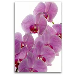 Premium Textil-Leinwand 80 x 120 cm Hoch-Format Phalaenopsis | Wandbild, HD-Bild auf Keilrahmen, Fertigbild auf hochwertigem Vlies, Leinwanddruck von Veronika Rix